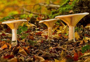 Jak przechowywać grzyby?